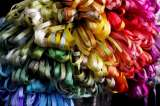 ALL 74 Montano Colorways (1 each) - Ribbon, 3.5mm