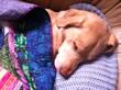 Kiku napping